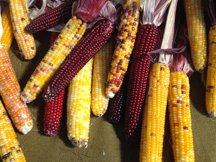 indian corn at the market