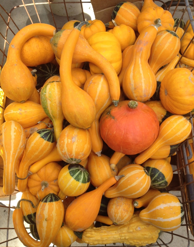 mini pumpkins at the market