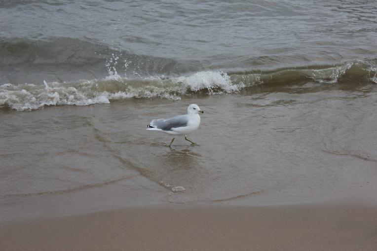 the beach at Lake Michigan
