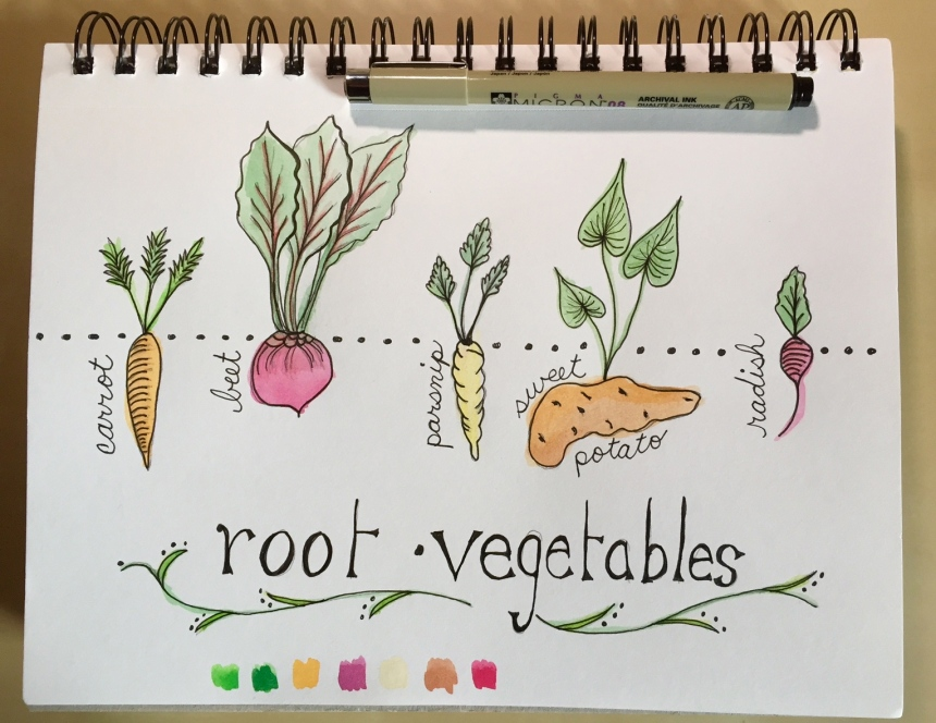 sketchbook painting root vegetables