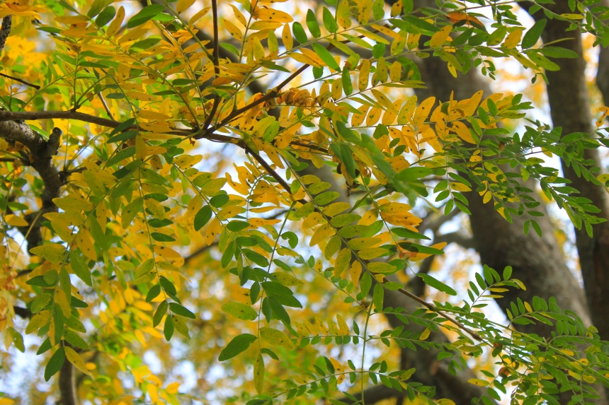 leaves changing colors