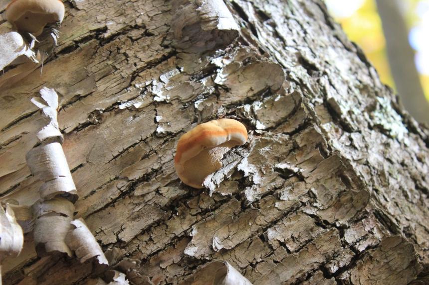 Door County - fungus