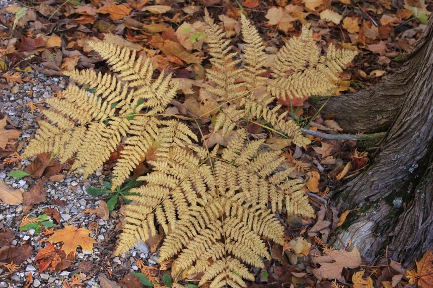 Door County - fern