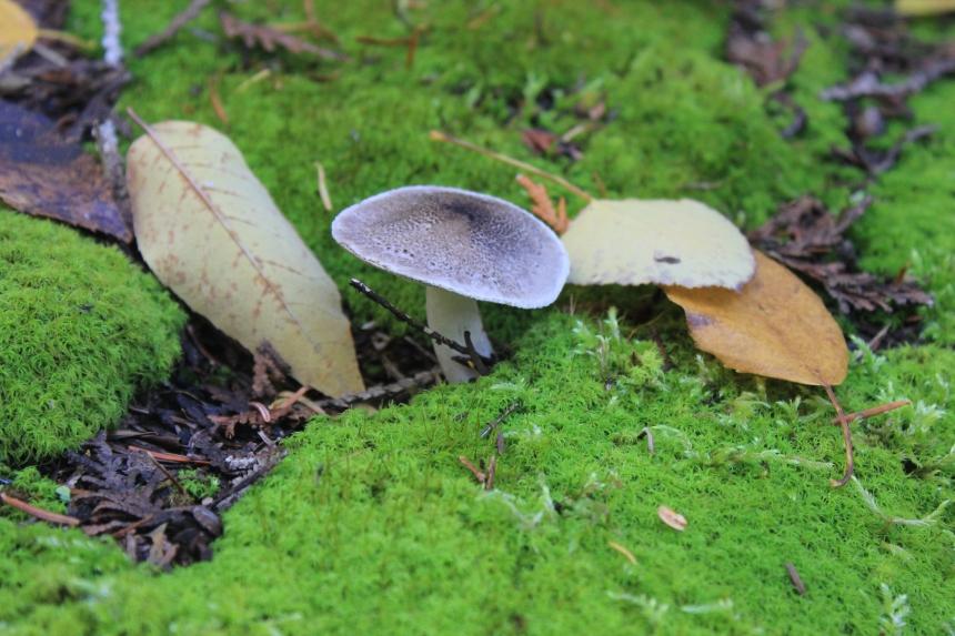 Door County - mushrooms