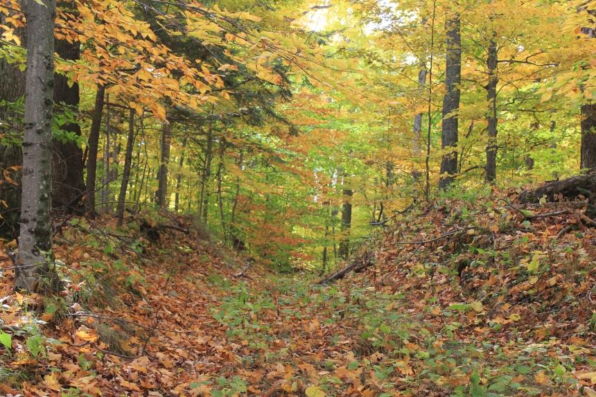 Door County - Fall Color