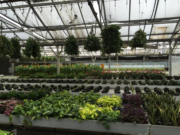 at the greenhouse