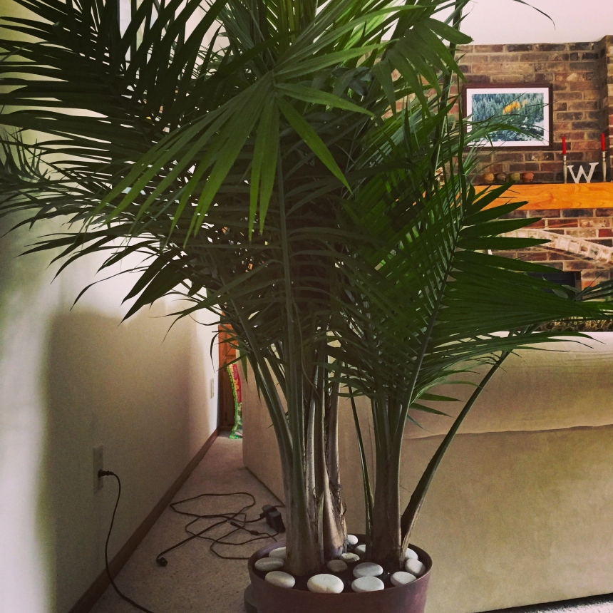 new palm tree
