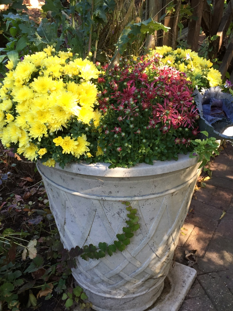 fall urn at botanical gardens