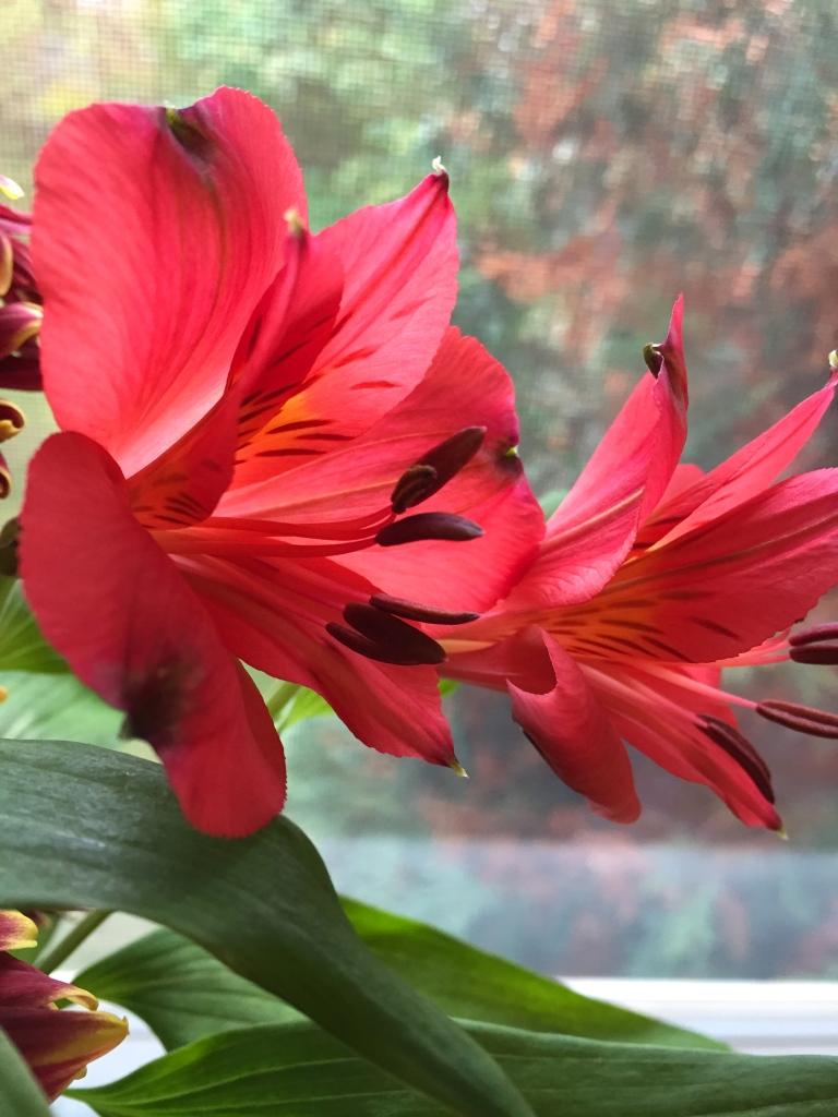 fresh cut flowers in red