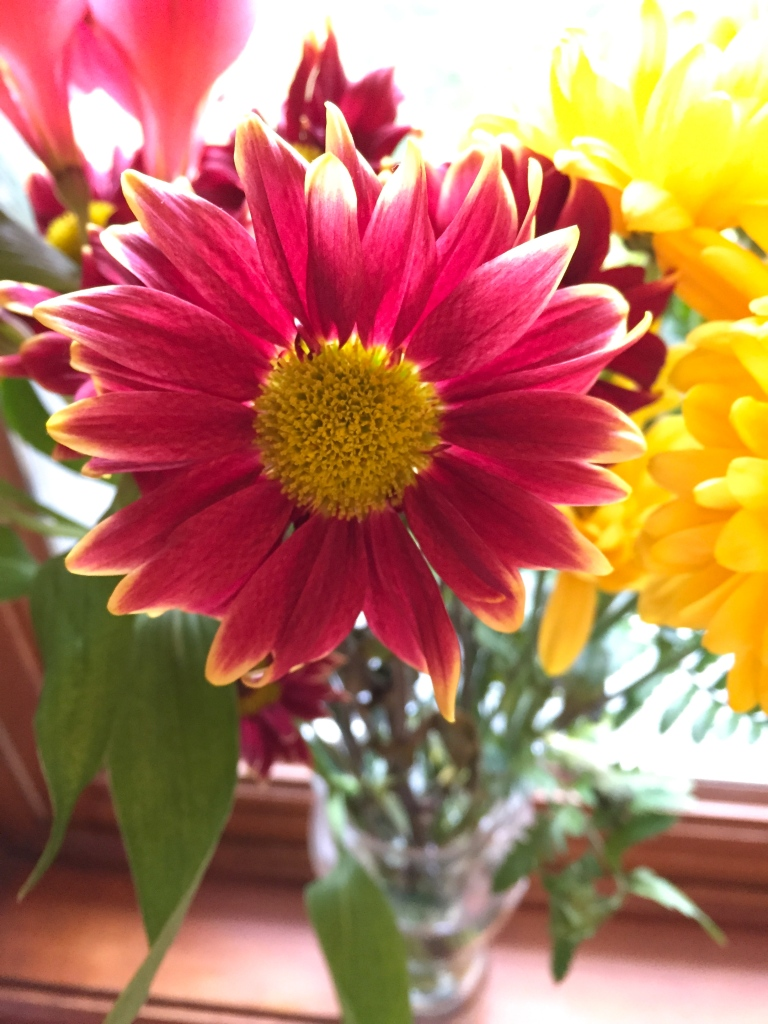 fresh cut flowers in red-yellow