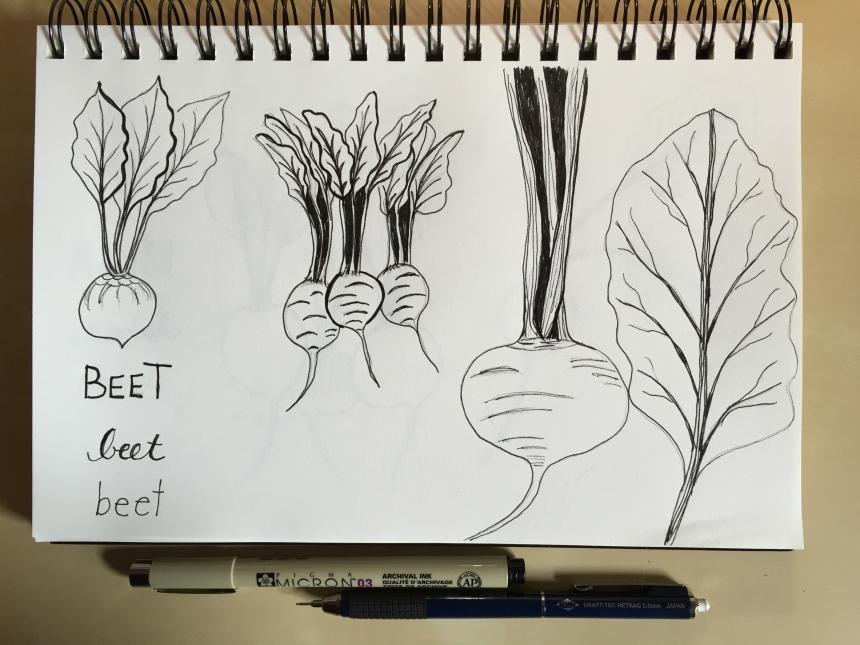 sketchbook root vegetables - beets