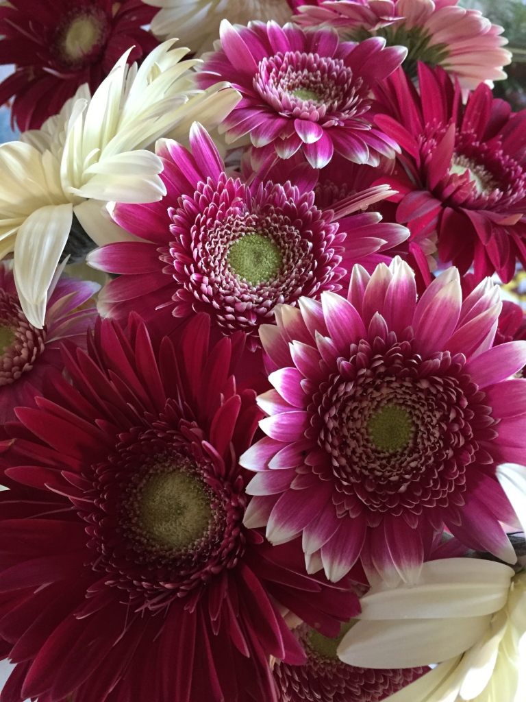 gerbera daisies for the week