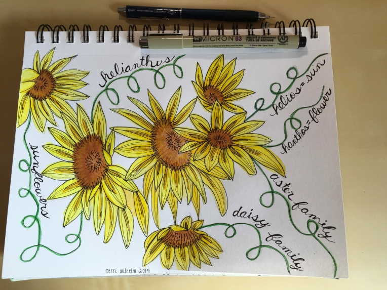 sketchbook sunflowers