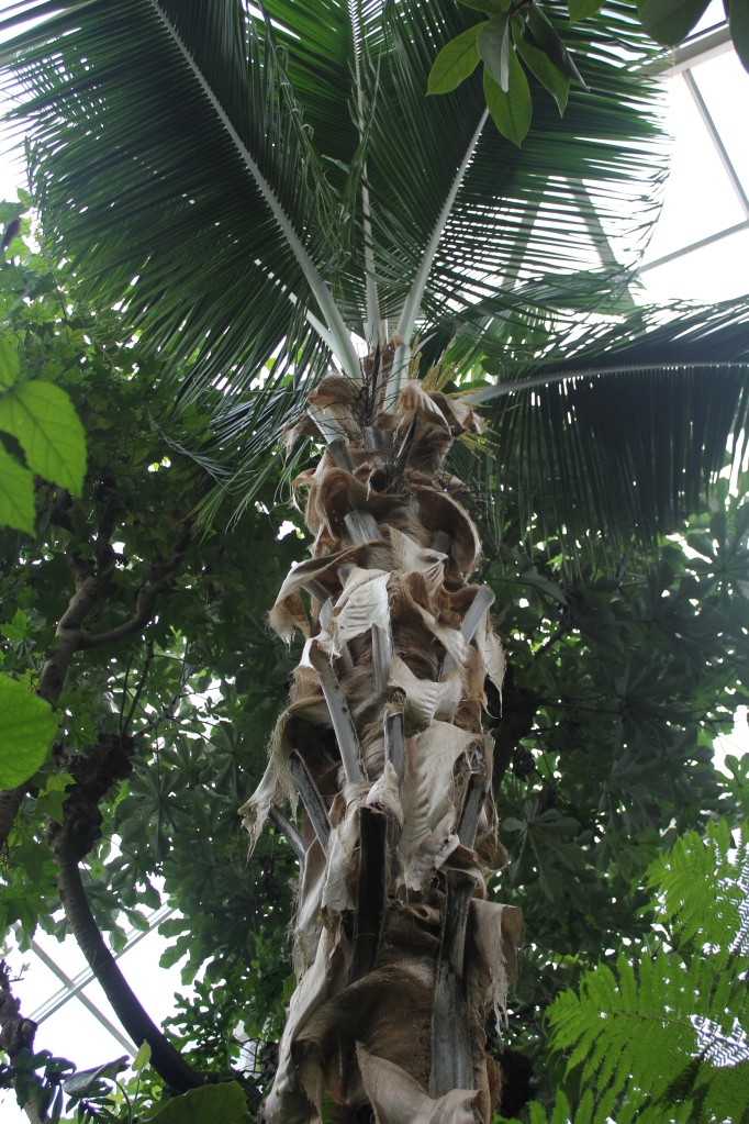 coconut tree in the rainforest