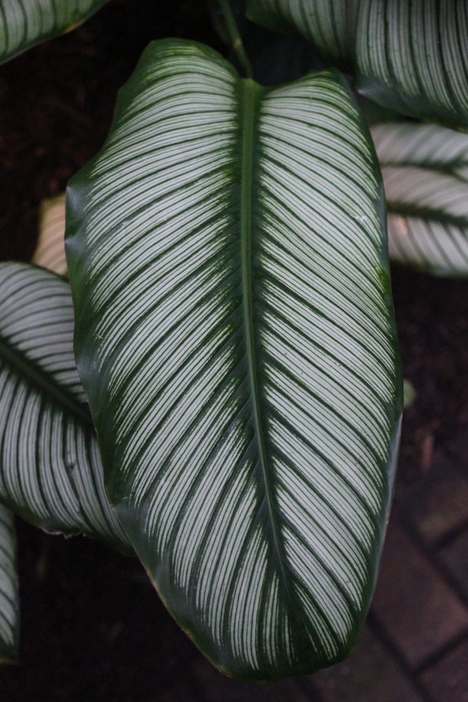 big leaves in the rainforest