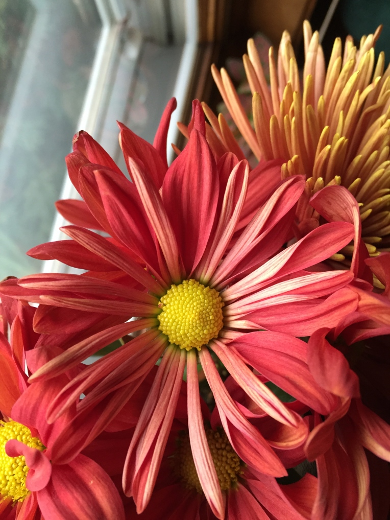 fresh cut flowers for fall