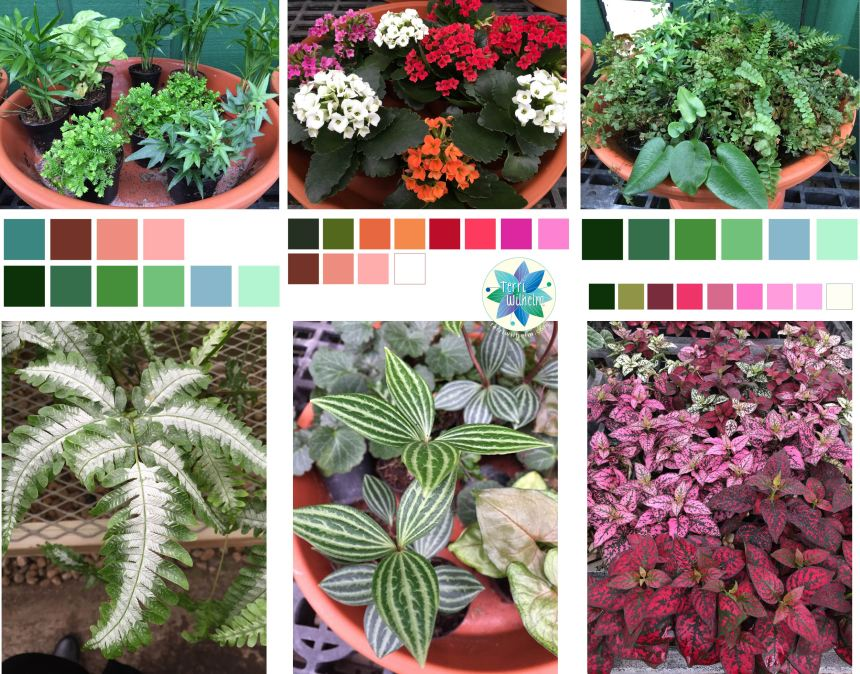 tiny plants color palettes