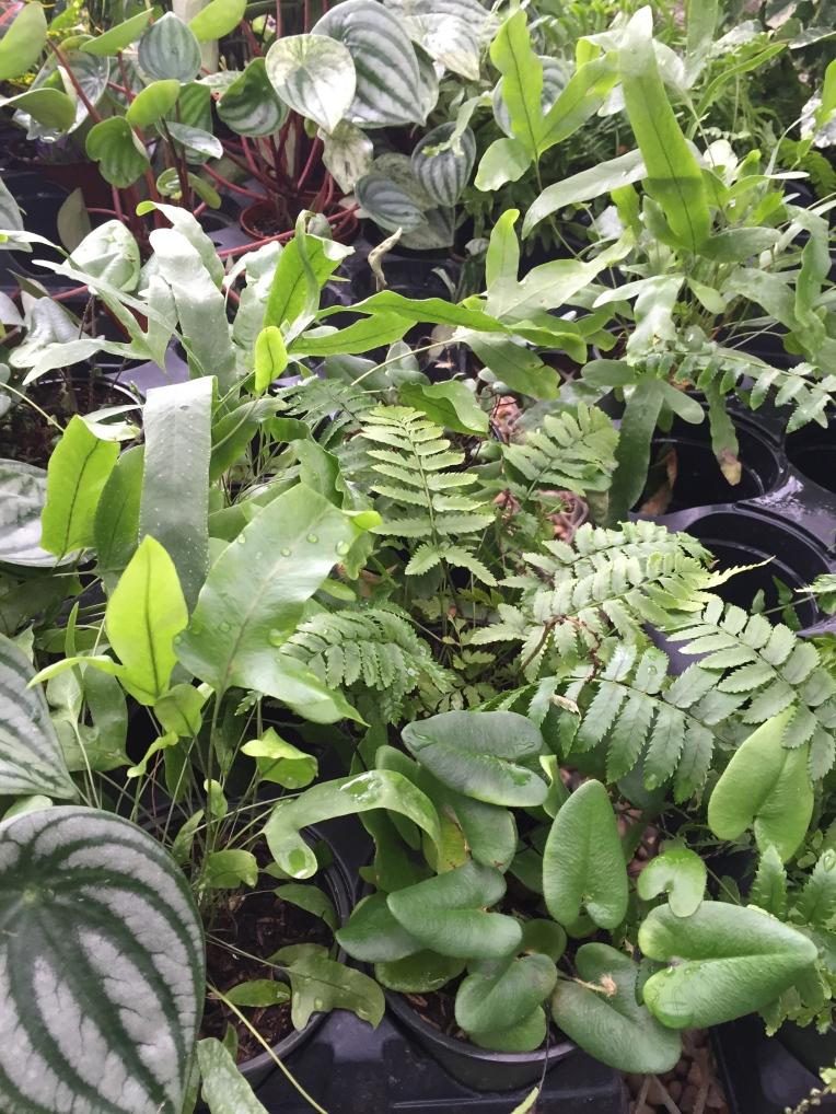 mini plants at the greenhouse