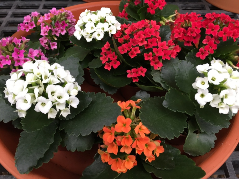 flowers at the greenhouse