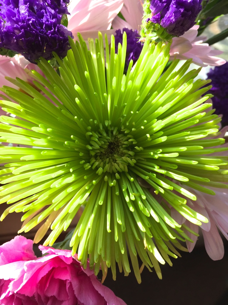 lime green pom daisy