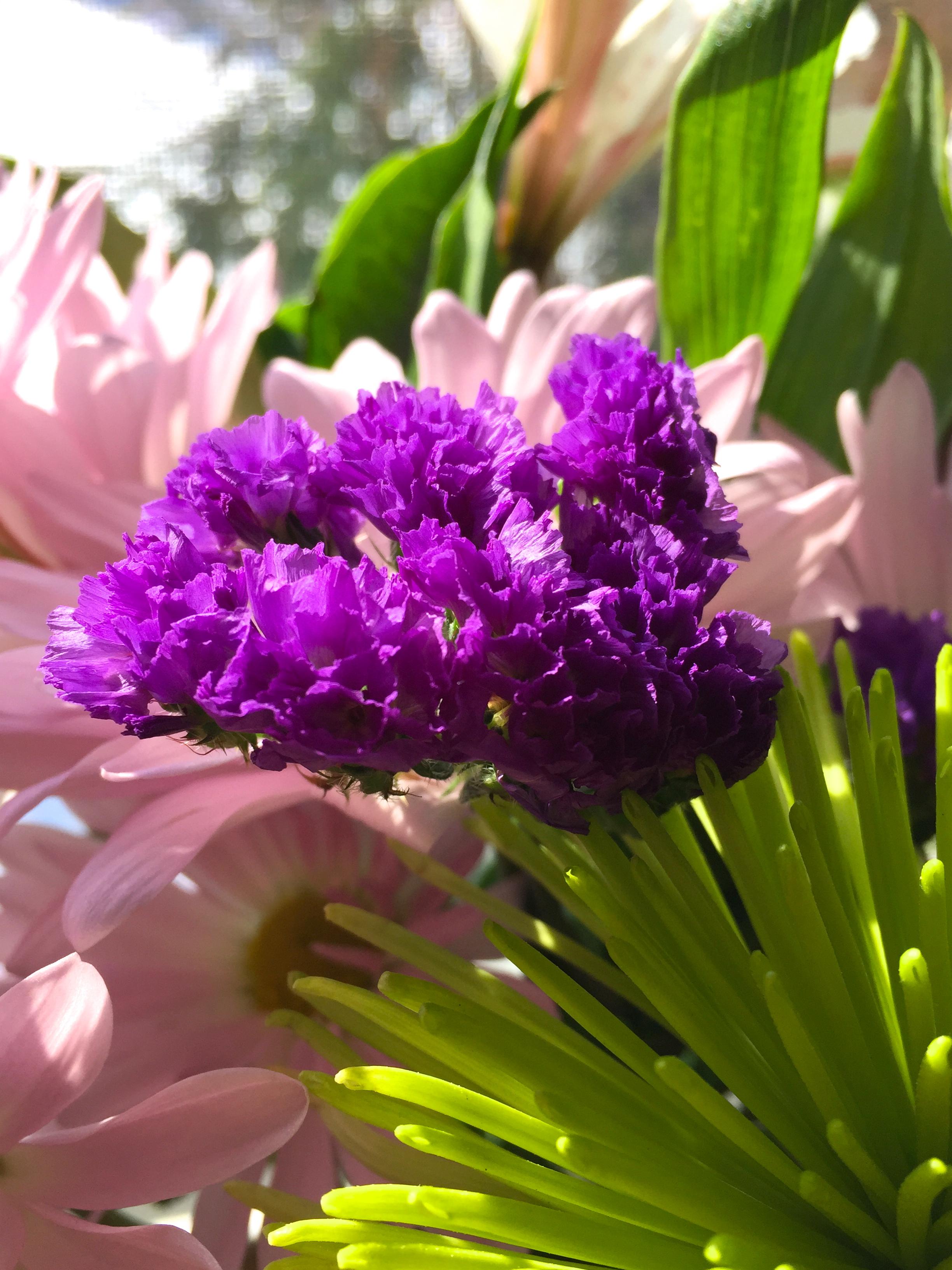 This Week's Fresh Cut Flowers