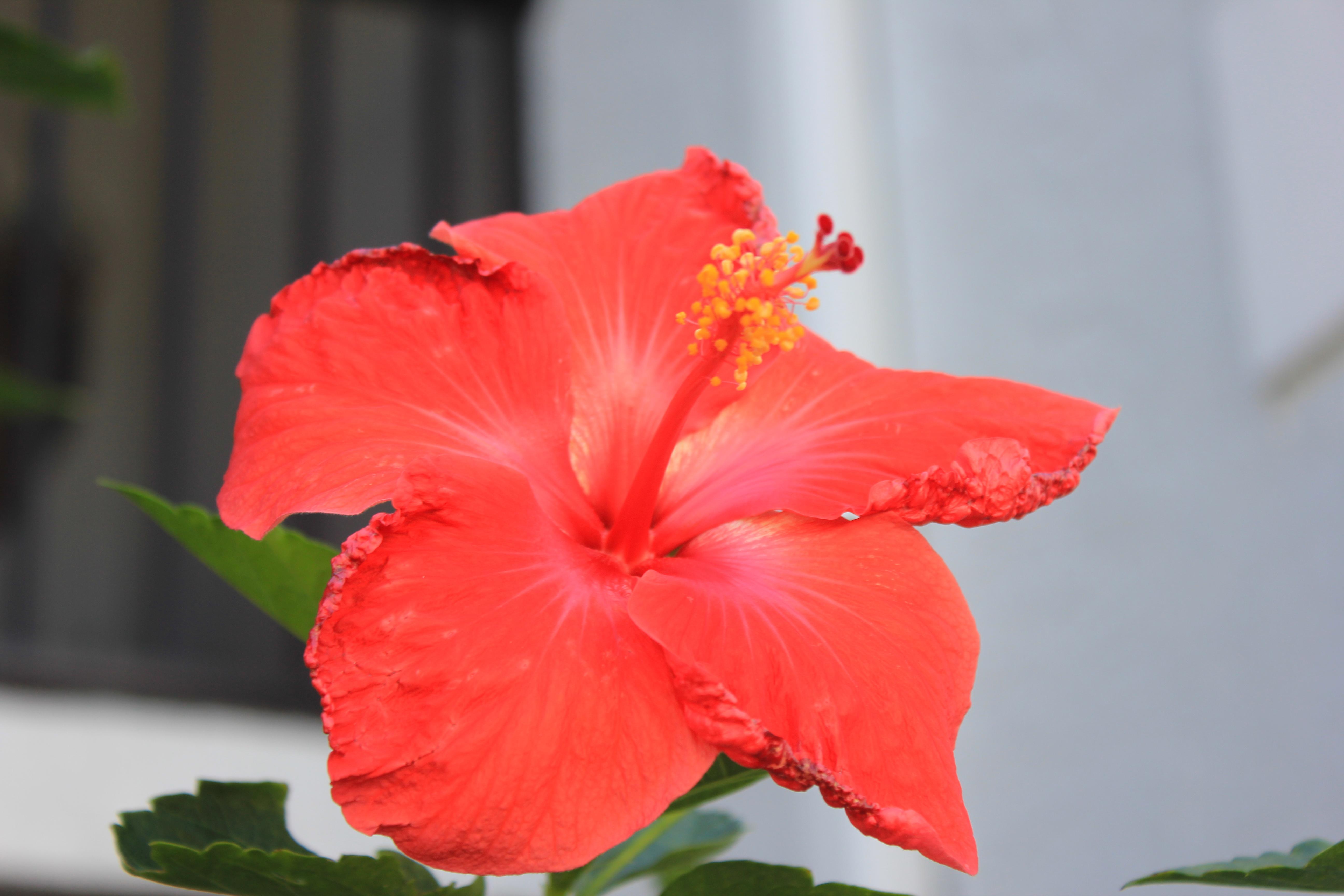 Terris notebook designer and illustrator page 19 yellow hibiscus red hibiscus izmirmasajfo