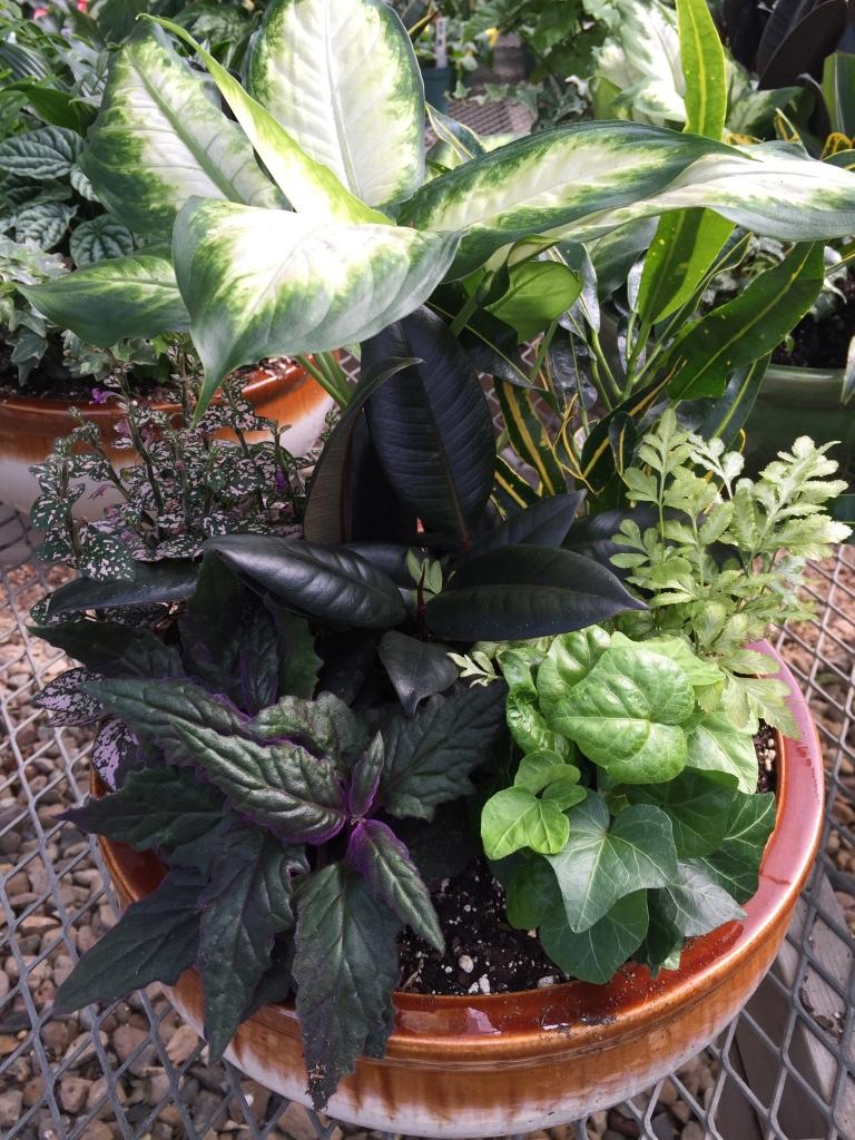 green arrangement at greenhouse