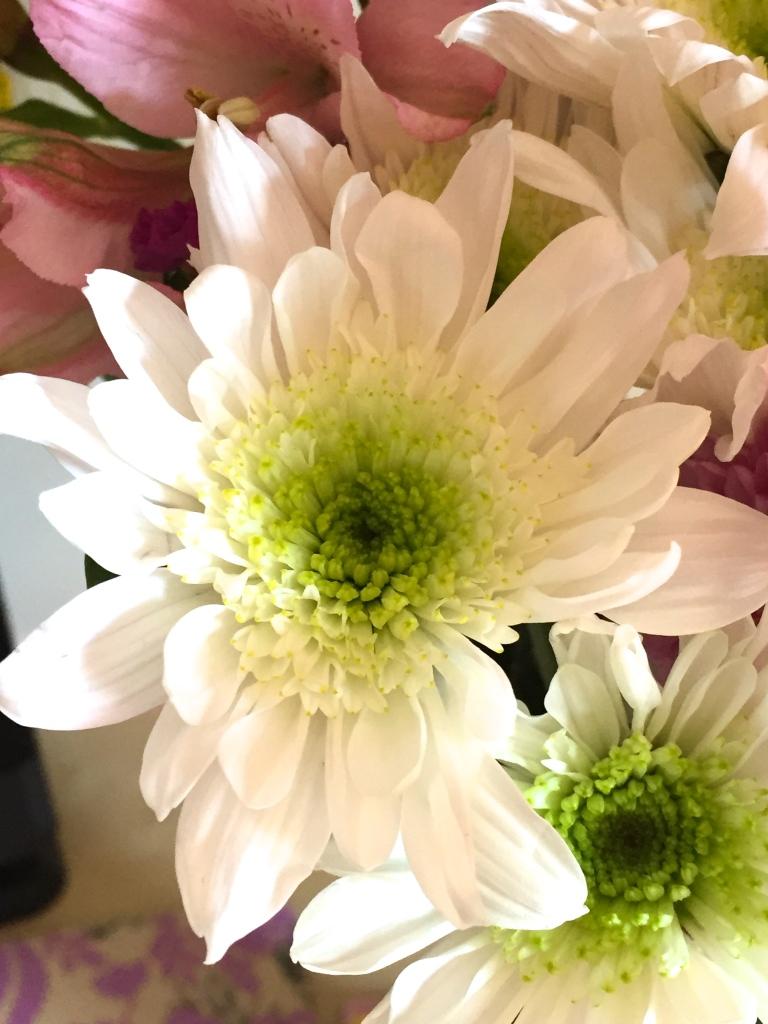 fresh cut  white daisy