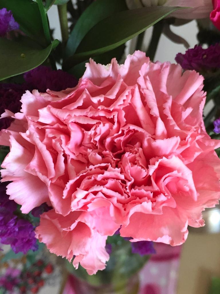 fresh cut  pink carnation