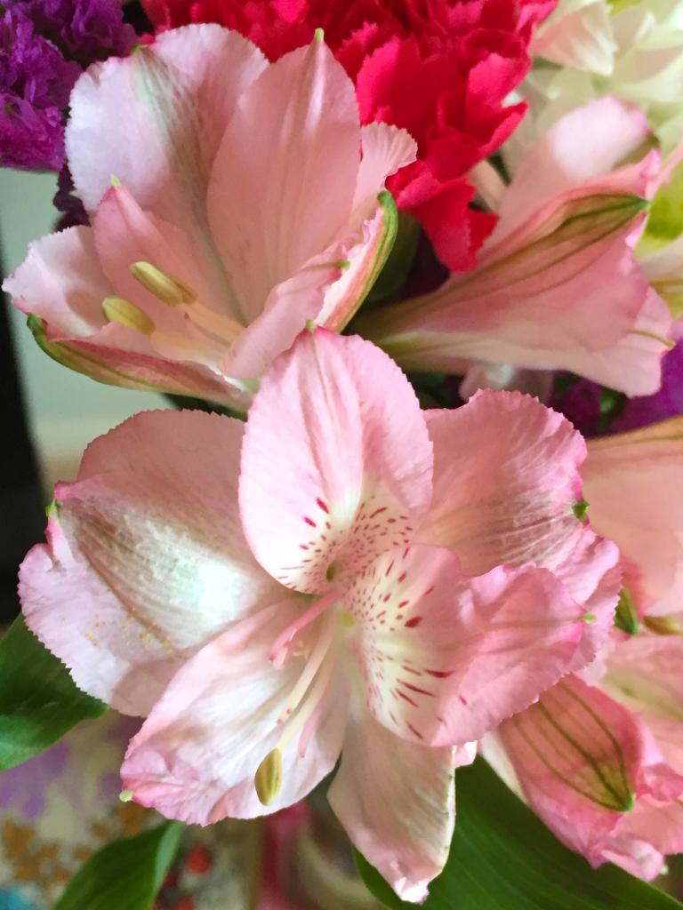 fresh cut  pink alstromeria