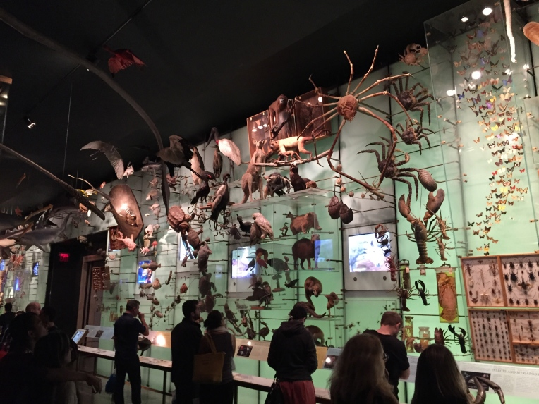 hall of biodiversity