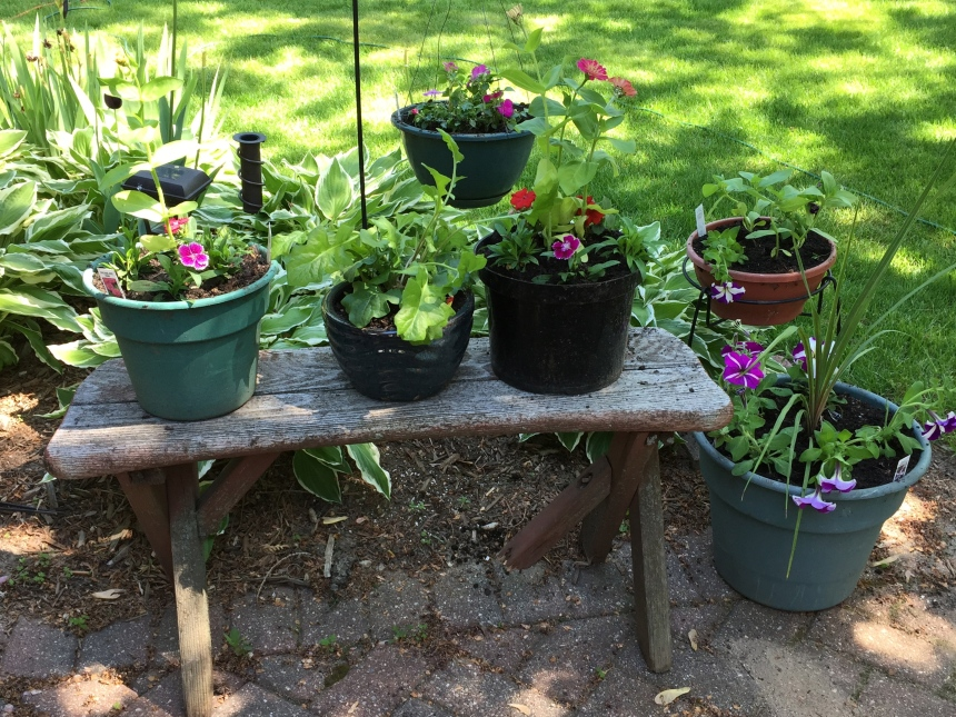 new garden containers