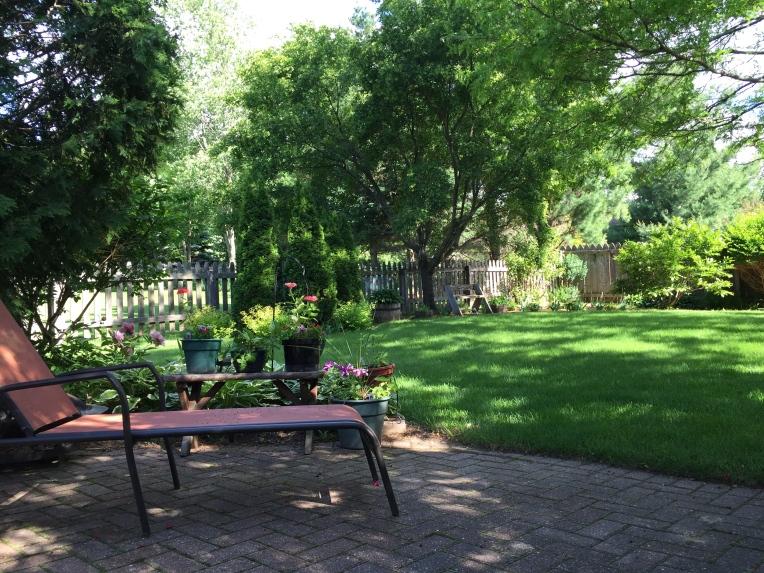 our backyard in June