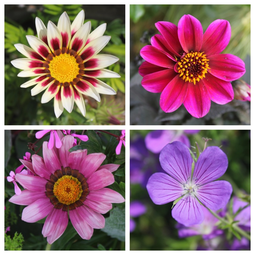 botanical garden flower collage