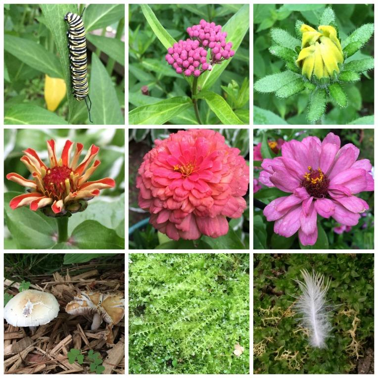 June Garden Collage