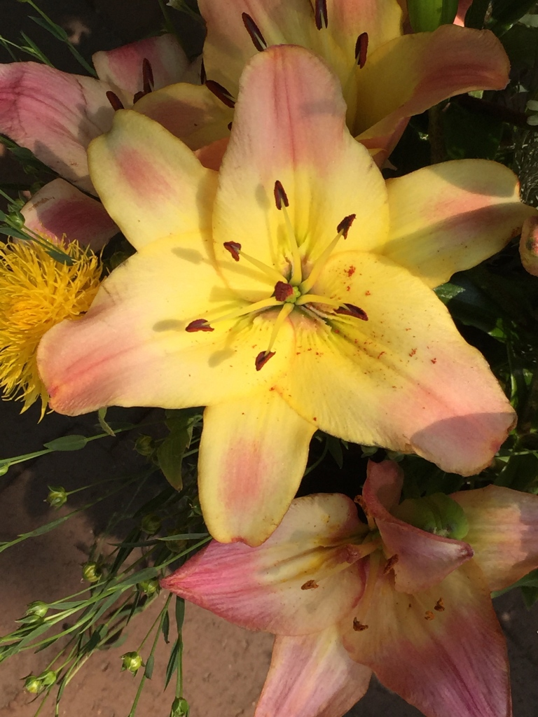 farmers market lily