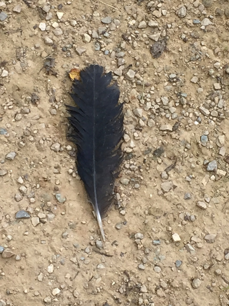 trail feather