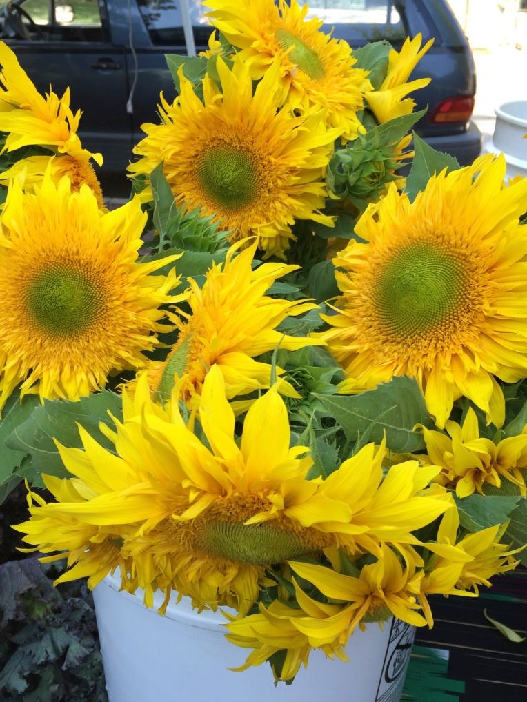 sunflower at farmers market