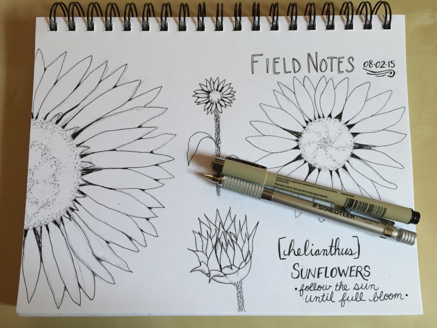 sketchbook page: sunflowers