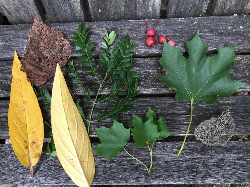 specimens from my backyard