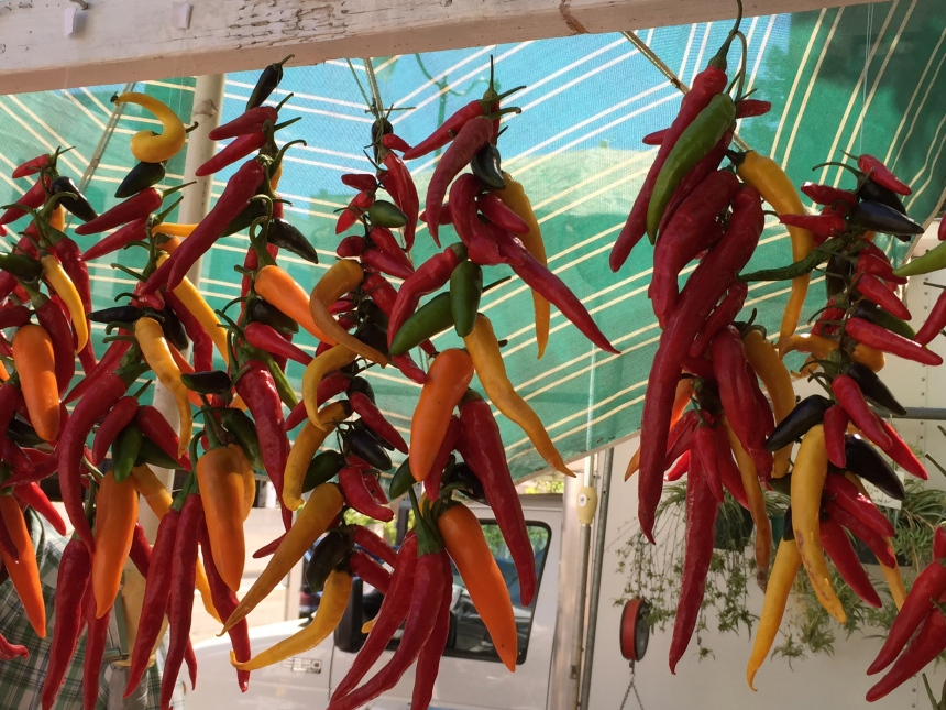 chili pepper strings at farmers market