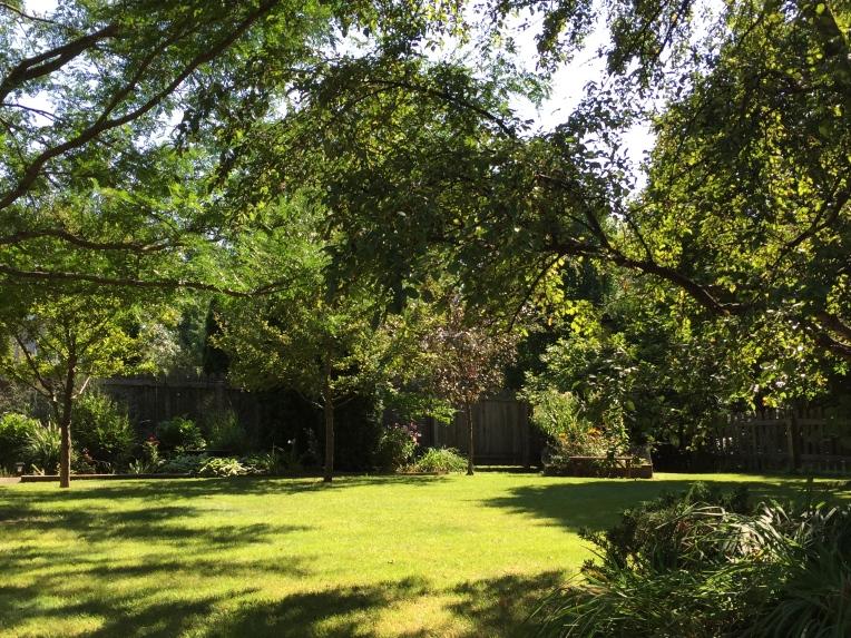 backyard in august