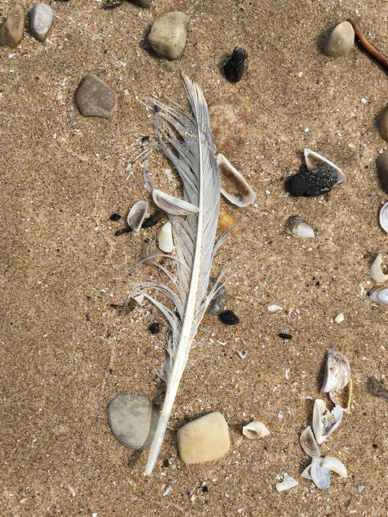 feather at Bradford Beach
