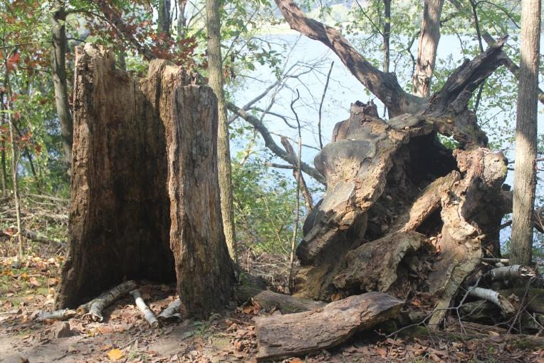 broken hollow tree