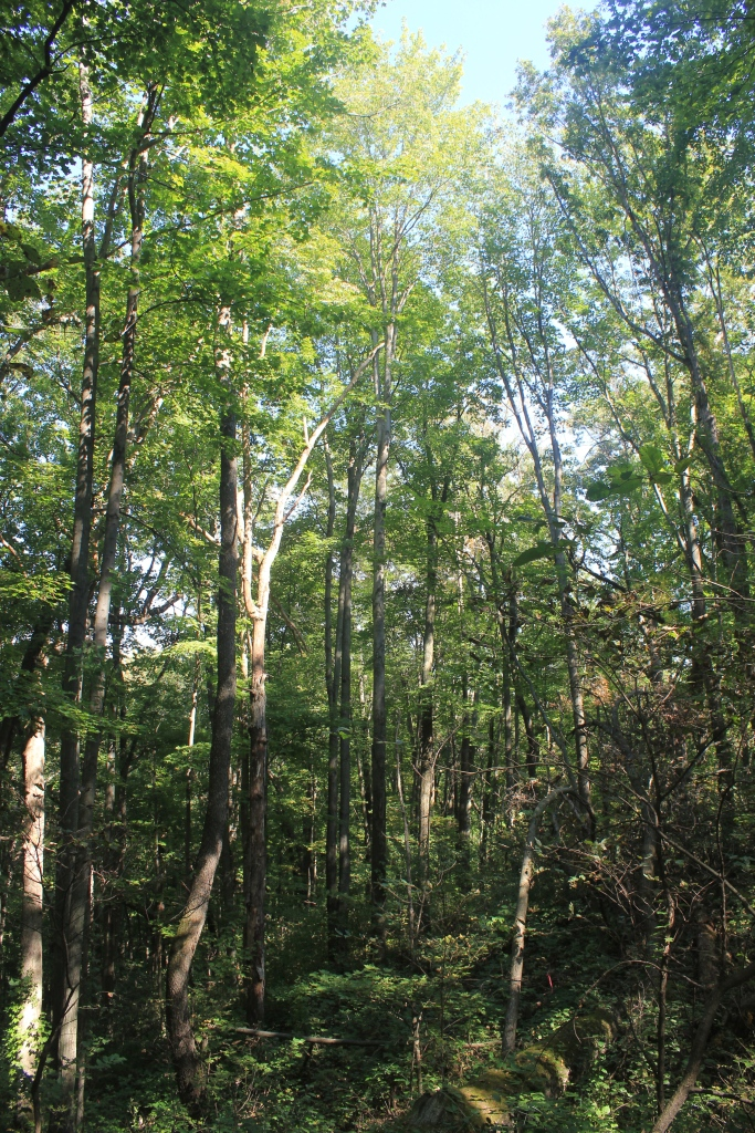 woods at Indian Lake