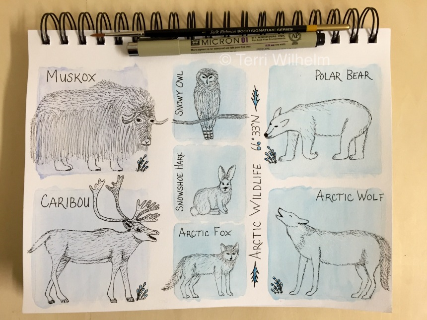 sketchbook page arctic wildlife