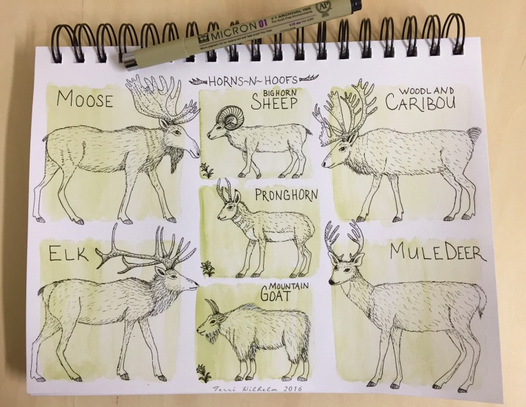 sketchbook page of deer