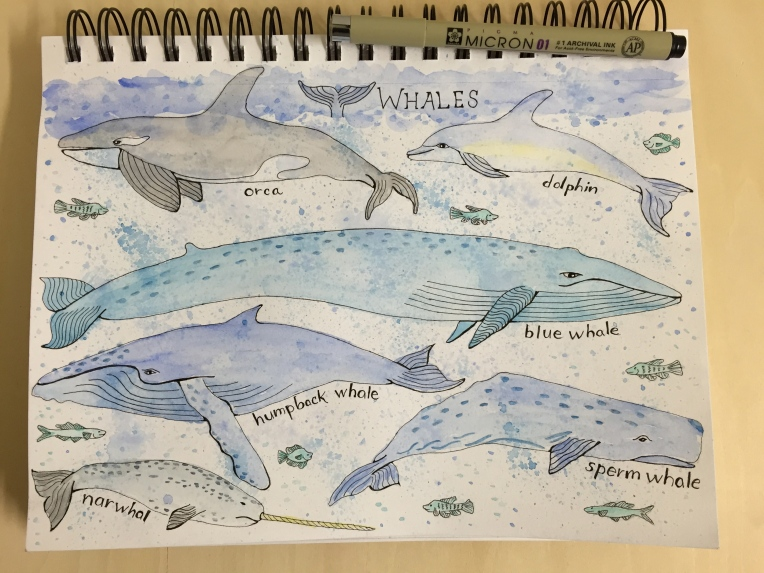 week 5 sketchbook page of whales