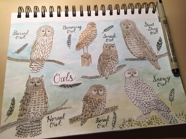 week 7 sketchbook page of owls