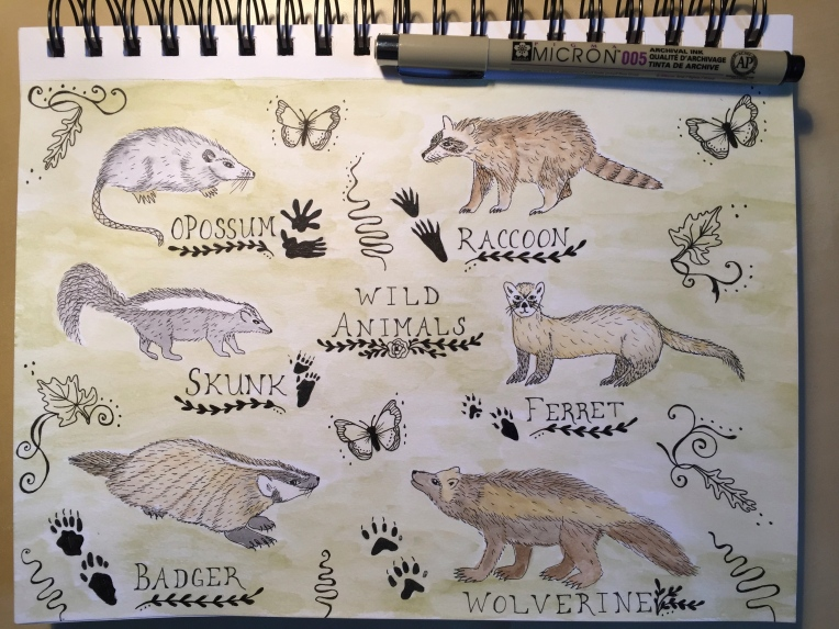 week 8 sketchbook page of wild animals